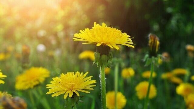 Hoa cổ vũ cho tình yêu thêm mạnh mẽ