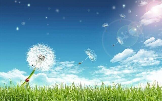 Hoa là lời tạm biệt để bước đến một khởi đầu mới