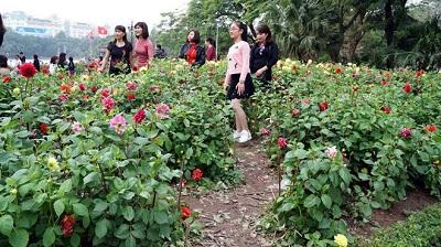 vườn hoa thược dược