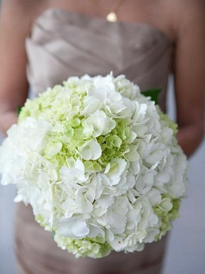 hoa cầm tay cô dâu cẩm tú cầu