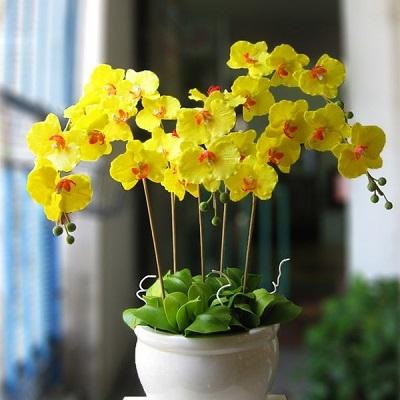 hoa tươi yên bình