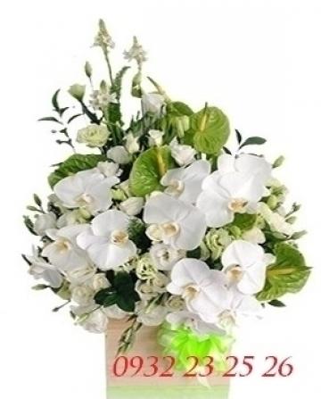hoa bàu bàng