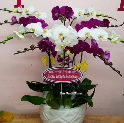 shop hoa bình thuận