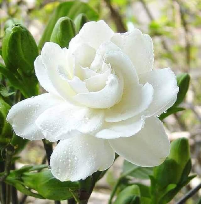 Tản văn: Hạ về cố hương gợi nhớ những mùa hoa...
